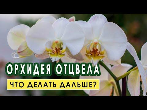 У вас отцвела орхидея.Что с ней делать дальше?