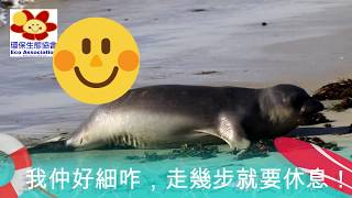 海豚哥哥 Mr Dolphin Thomas《兒童的科學 - 第154期》大鼻子的北象鼻海豹 Northern Elephant Seal Mirounga angustirostris