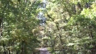 Harrison Bay Tennessee State Park: Campground B