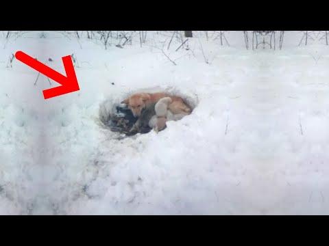Собака жила снегу щенками за 15 марта
