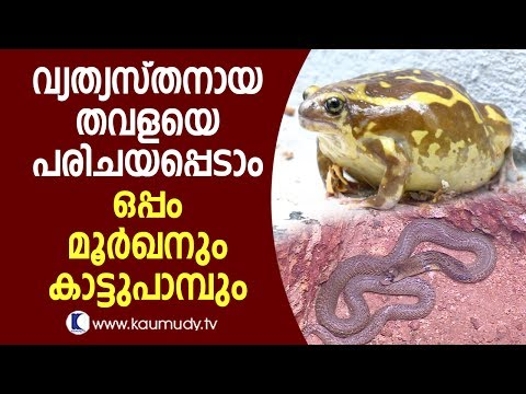 Wow! Here comes a unique frog; also a cobra and a wild snake | Snake Master