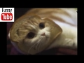Смешные коты, приколы с котами, смешные видео с котами ржака, Funny Cats Best Funny Videos