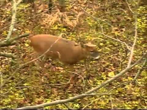 Deer Hunting on Public Land -- Deer & Deer Hunting TV ...