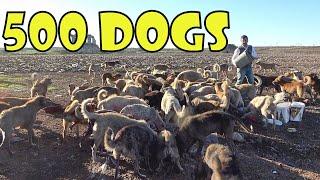 Droog - 犬・犬・犬(ドッグ・ドッグ・ドッグ)
