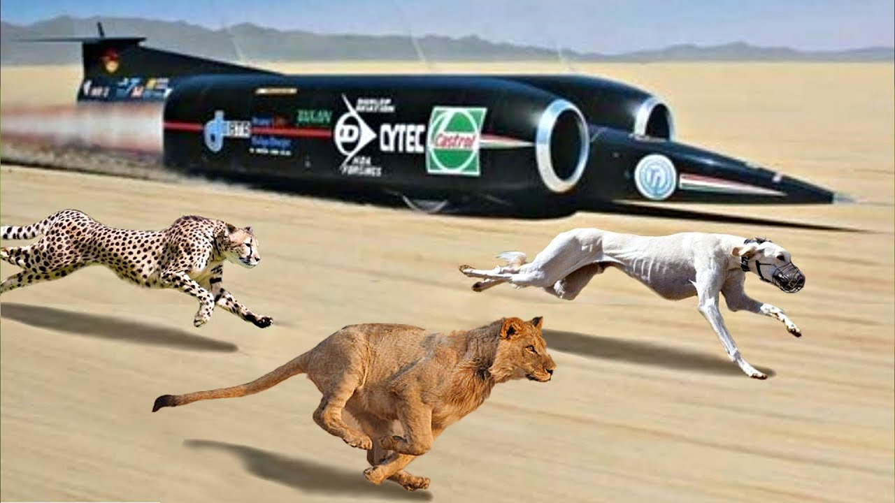 20 Animals Faster than Cars you Never Imagined