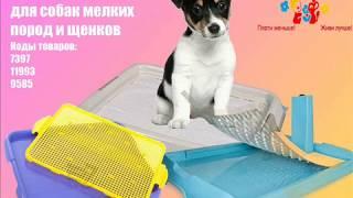 Обзор туалетов для собак мелких пород и щенков
