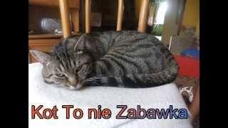 Kot To Nie Zabawka ma youtube