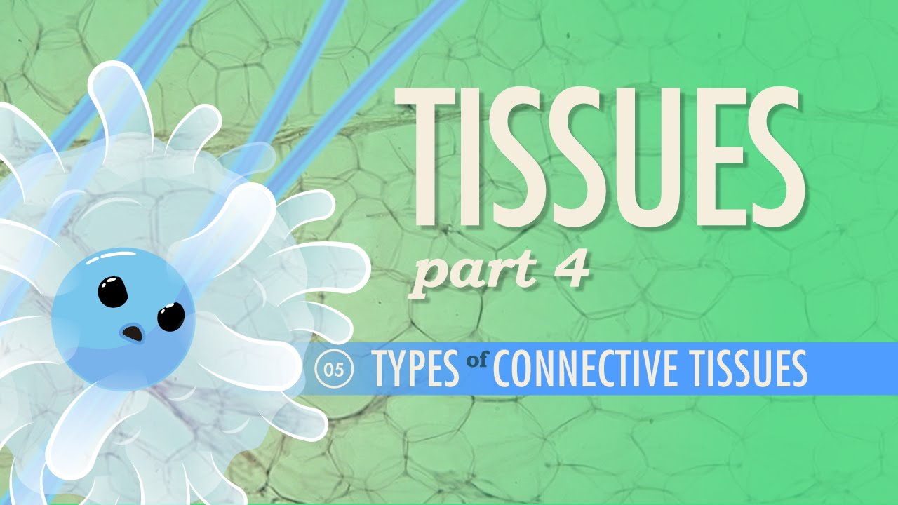 Tissues, Part 4 - Types of Connective Tissues: Crash Course A&P #5