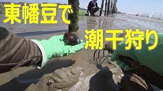 (2019/4/8撮影) 東幡豆海岸での潮干狩りです。 アサリは少なく、アオヤ...