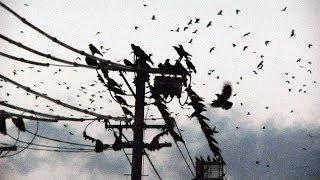 Alter Bridge - Crows On A Wire (Subtítulos Español)