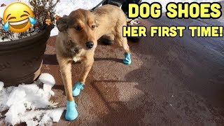 DOGS WEARING SHOES FOR THE FIRST TIME! (Funny Reaction)