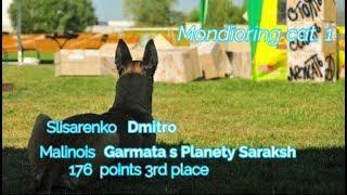 """MR1 """"Mafia"""". Slisarenko Dmitro. Malinois Garmata s Planety Saraksh 176 points 3rd place"""