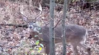 Eliminate Guesswork to Find and Kill More Deer
