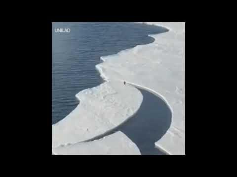 Un pingüino protagoniza un salto de película para no separarse del grupo