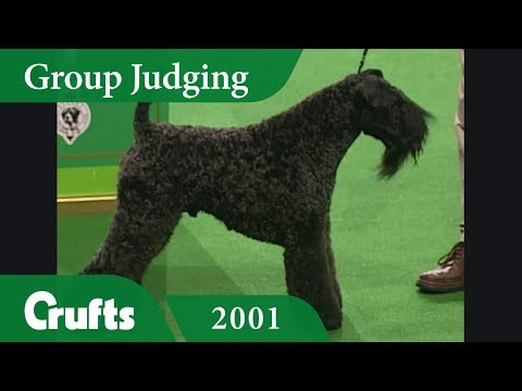 Kerry Blue Terrier wins the Terrier Group Judging at Crufts 2001