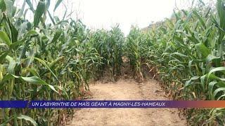 Un labyrinthe de maïs géant à Magny-Les-Hameaux