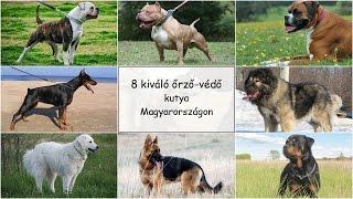 8 Kiváló őrző-védő Kutyafajta Magyarországon