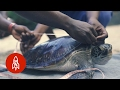 Saving Zanzibar's Sea Turtles