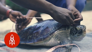 Fighting to Save Zanzibar's Sea Turtles thumbnail