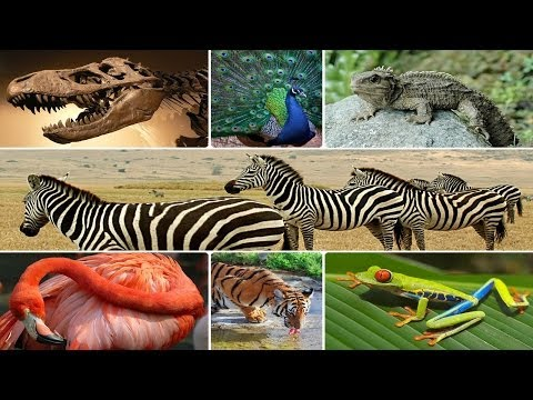 The Evidence For Evolution Made Easy (HD)