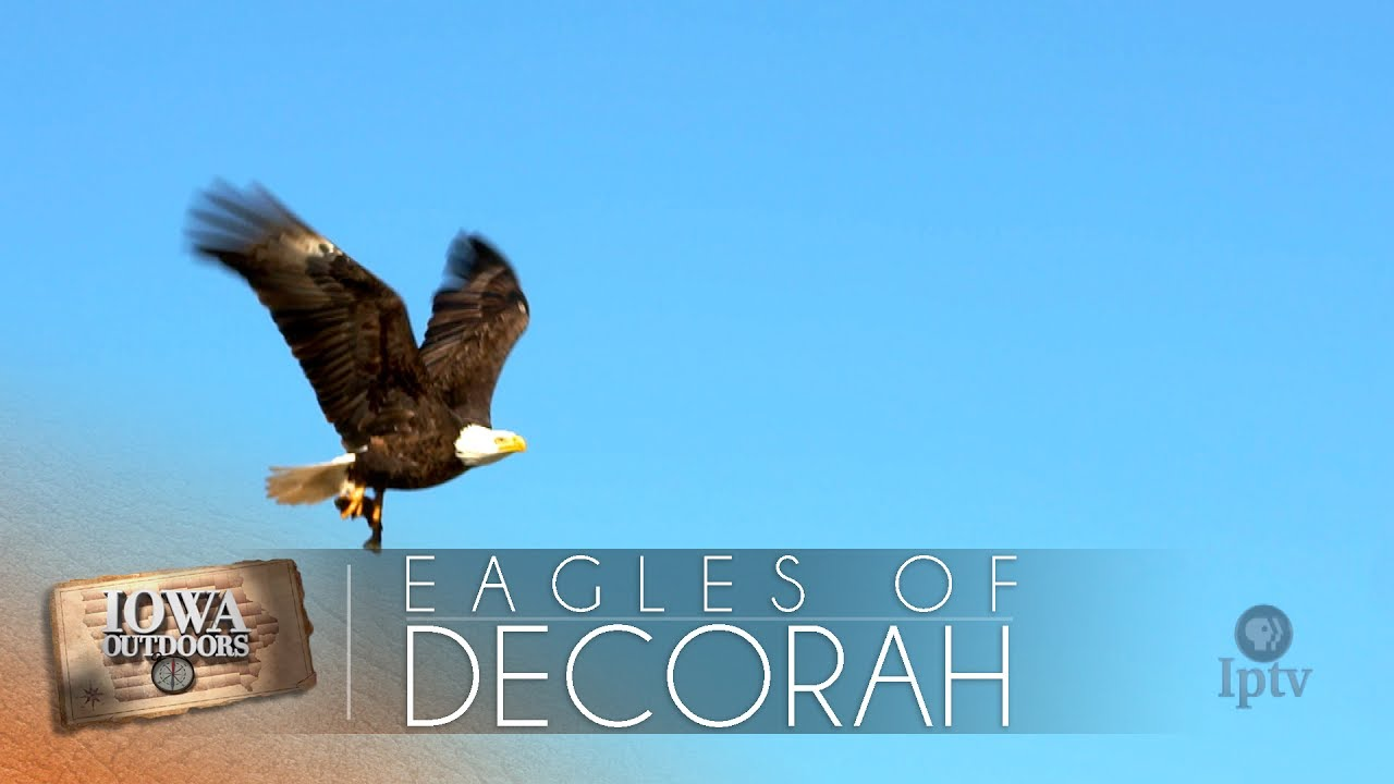 The Eagles of Decorah | IPTV
