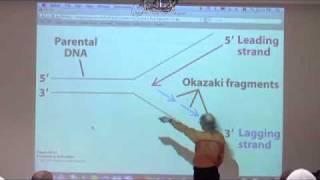 DNA Replication, Recombination, Repair II
