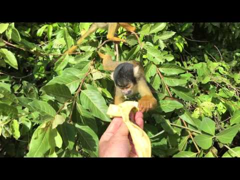 Feeding squirrel monkeys from our boat on the Amazon near Rurrenabaque, Bolivia
