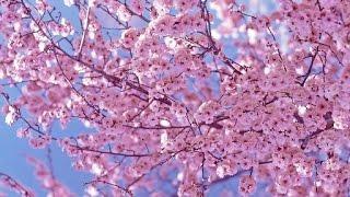 Весна, животные!!!