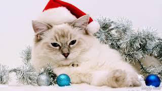 Коты поздравляют с новым годом!!!🎅🎅🎅
