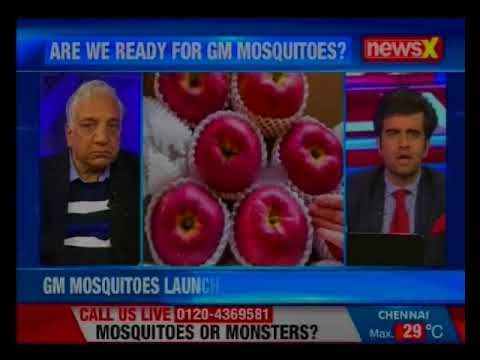 GM Mosquitoes launched in Maharashtra villages; GM breed aims to contain dengue, zika, chikungunya