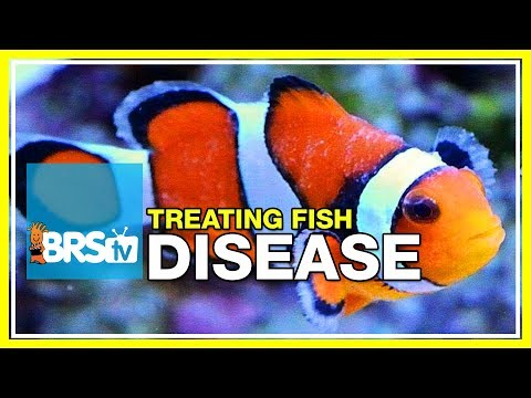 Week 51: What You Need To Know To Cure Fish Disease & Parasites | 52 Weeks Of Reefing