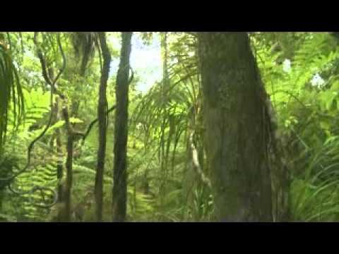 Puketi Forest Trust Restores Birdsong To Puketi - Bay Chronicle