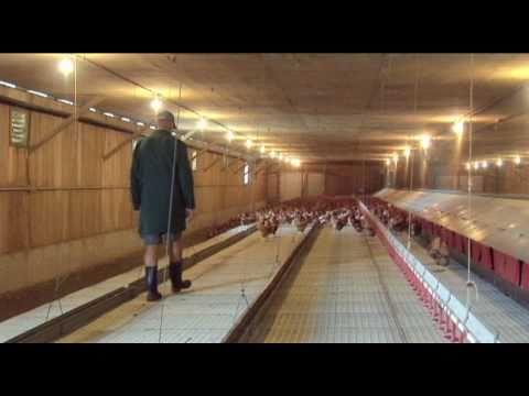 Daily Routine Free Range Egg Farm Video Youtube
