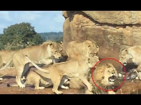 Γκέι λιοντάρια σεξ