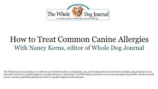 How to Treat Common Canine Allergies