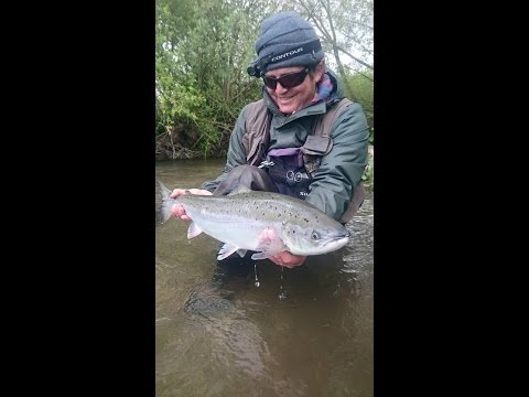 Atlantic Salmon on the Fly   Harbridge Bend, Somerley, Hampshire Avon