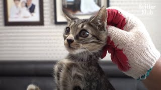 Kitten Found On The Expressway Vanished When He Was Brought Home | Kritter Klub