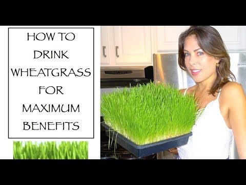 How To Drink Wheatgrass For Maximum Benefits