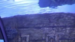 Antalya Aquarium Океанариум Анталии(, 2014-07-08T08:11:26.000Z)