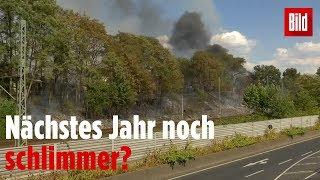 Wetterchaos in Deutschland: Neue Waldbrände im Osten - Überschwemmungen im Westen