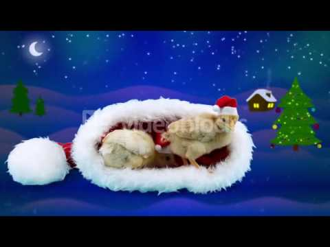 2017 CELEBRATION WINTER NIGHT BACKGROUND TWO GOLDEN SMALL ROOSTERS CHINESE ZODIAC SYMBOL IN RED SANT