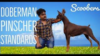 BEST OF DOBERMAN PINSCHER DOG BREED   THE SUPER INTELLIGENT DOG BREED ! SCOOBERS