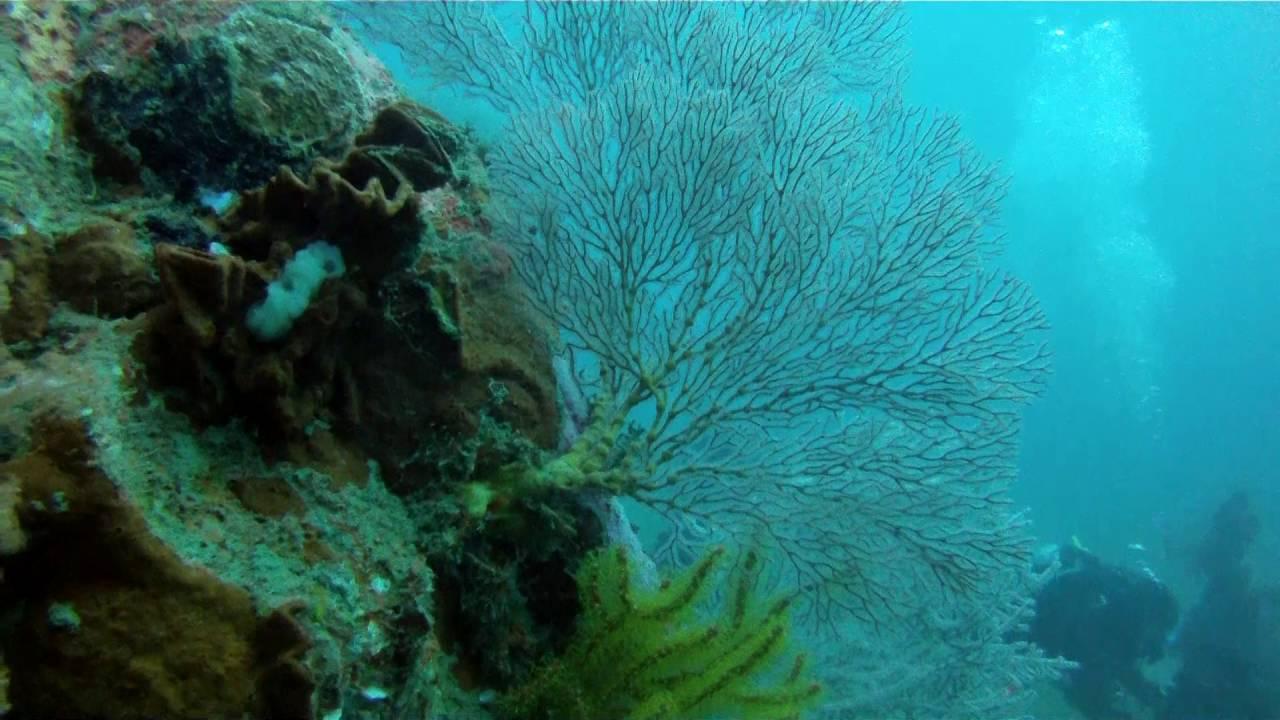Sea Rovers Dive Center Pemuteran Nw Bali Ssi Sdi Dive