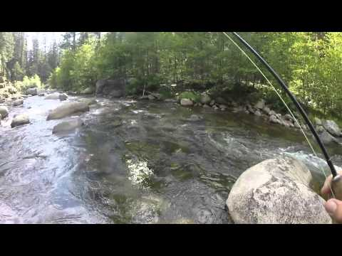 Fly fishing stanislaus river ca youtube for Stanislaus river fishing