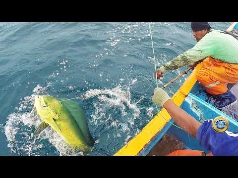 Pesca de PERICO o mahi- mahi - dolphinfish fishing - Deep sea fishing