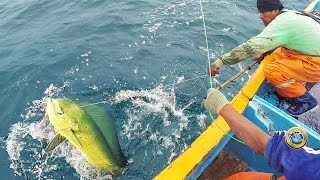 Pesca de PERICO o mahi- mahi - dolphinfish fishing - Deep sea fishing