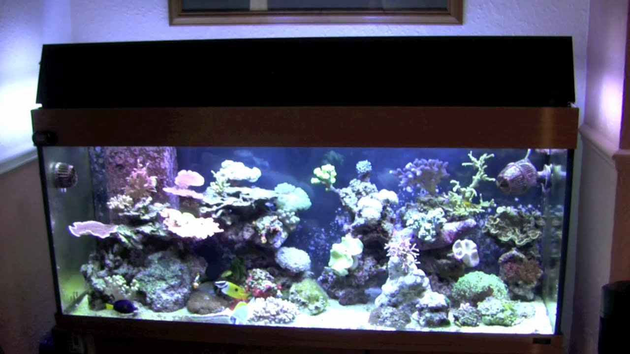 juwel 240 tank marine reef conversion youtube. Black Bedroom Furniture Sets. Home Design Ideas