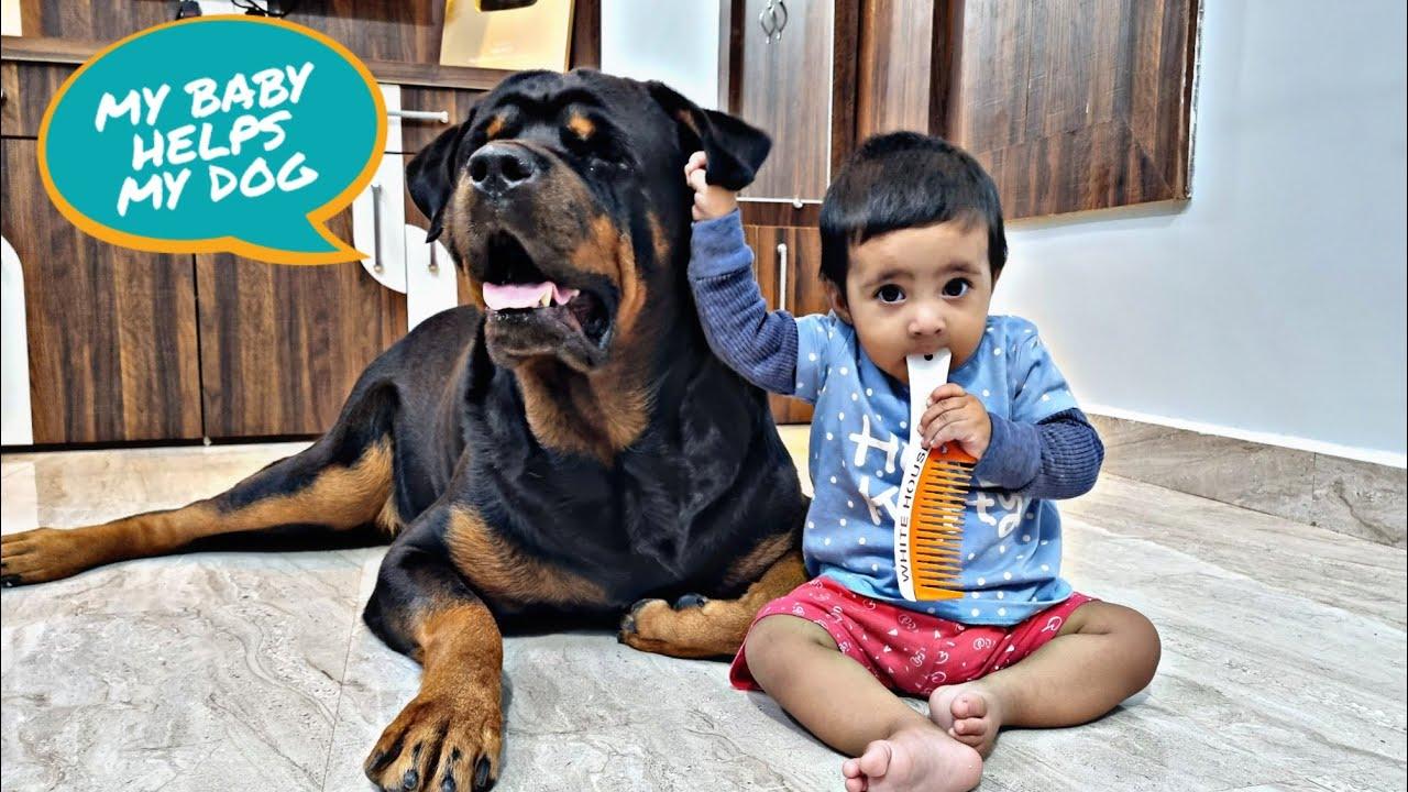 Download aaru help jerry in his grooming|| dog grooming|| funny dog video||