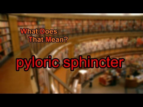 What does pyloric sphincter mean?