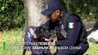 Мексиканская полиция устроила псам проводы на пенсию